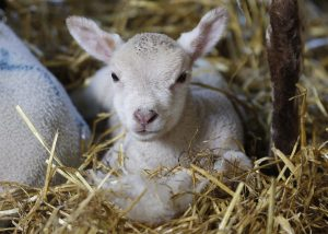 Coombes Farm – Sussex Working Farm Experience