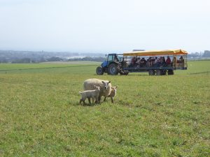 We will happily take your group out on a tractor ride to see the farm in full.